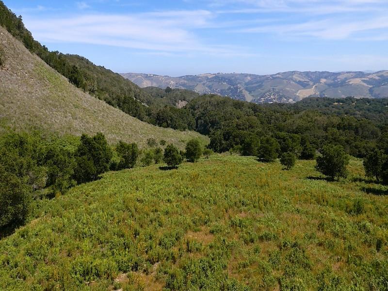 1 Mesa Trail, Carmel, CA 93923