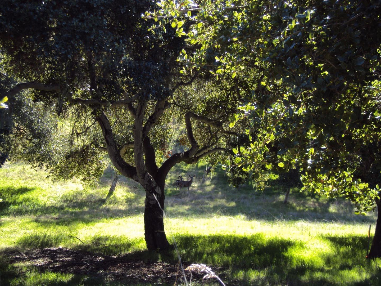 0 Monterra Ranch #LOT 1, Monterey, CA 93940