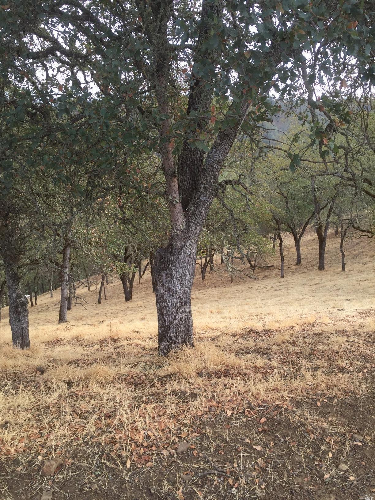 0 Steele Canyon Road #6, Napa, CA 94558