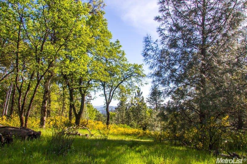 5230 Roquero Cerro Road, Greenwood, CA 95635