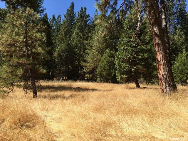 20100 W Pine Dr, Volcano, CA 95689