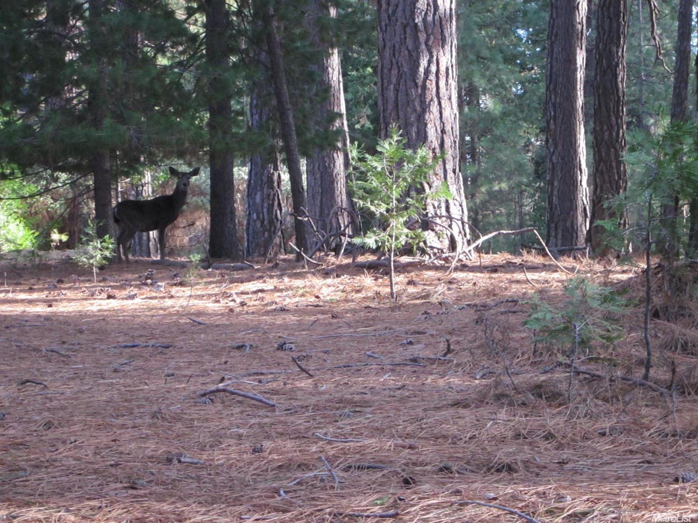 0 Pine Ridge Drive, Grizzly Flats, CA 95636