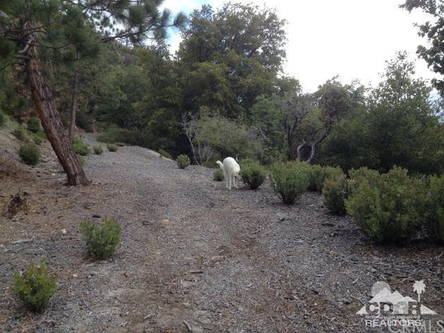 Cascade, Idyllwild, CA 92549