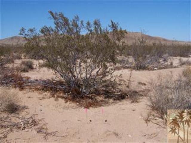 0 Belfair Dr, Joshua Tree, CA 92252