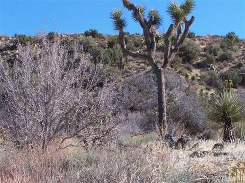 0 Twentynine Palms Hwy, Yucca Valley, CA 92284