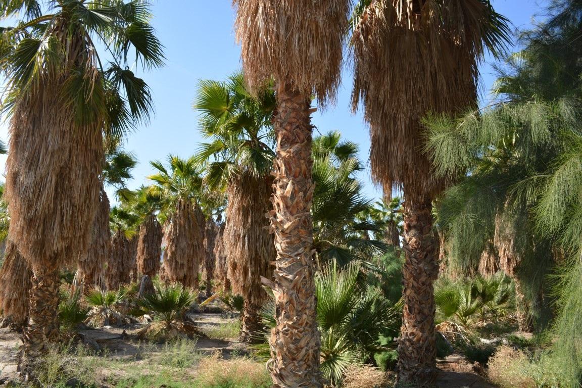 00 Borrego Springs #00, Borrego Springs, CA 92004