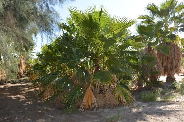 00 Borrego Spgs #00, Borrego Springs, CA 92004