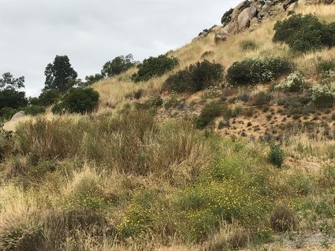 19 31 Acres Harbison Canyon Rd #12, El Cajon, CA 92019