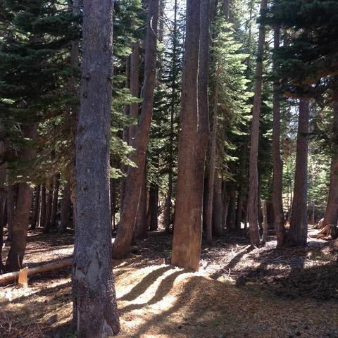 7464 Hillside Dr, Soda Springs, CA 95728