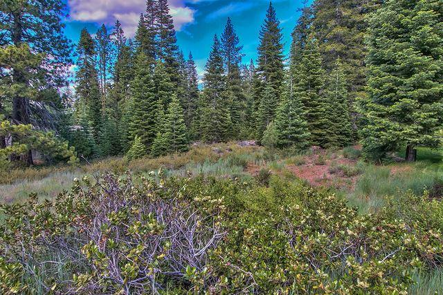 10905 Pine Cone Ct, Truckee, CA 96161
