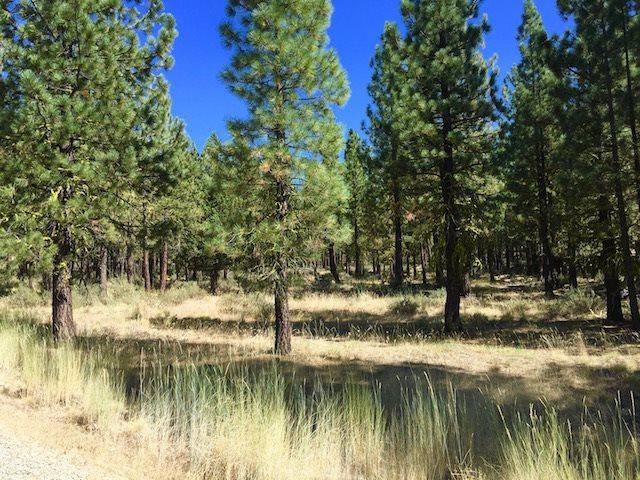 295 Deer Trl, Portola, CA 96122