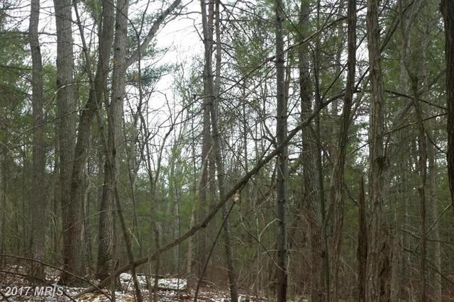 0 Piney Mountain Rd, Luray, VA 22835