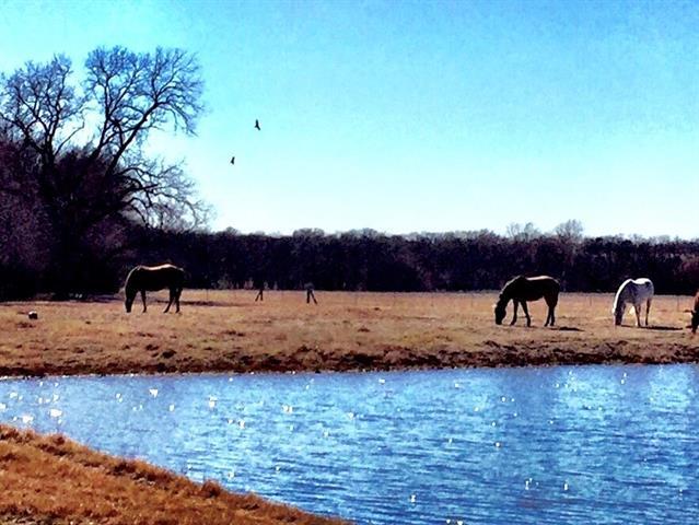 7150 Old Valdasta Rd, Blue Ridge, TX