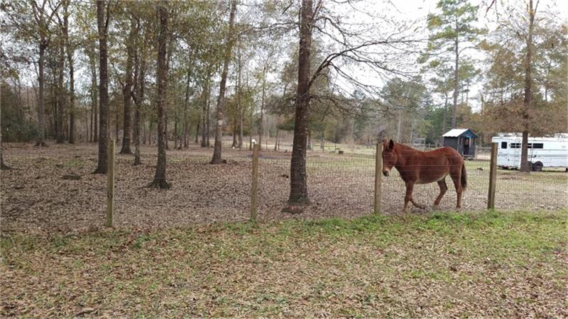 15720 Hayden Rd, Conroe, TX