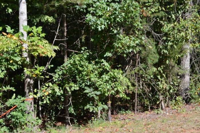 0 Oak Drive #LOT 7, Toccoa, GA 30577
