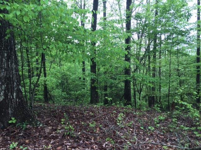 0 Forest Run, Dahlonega, GA 30533
