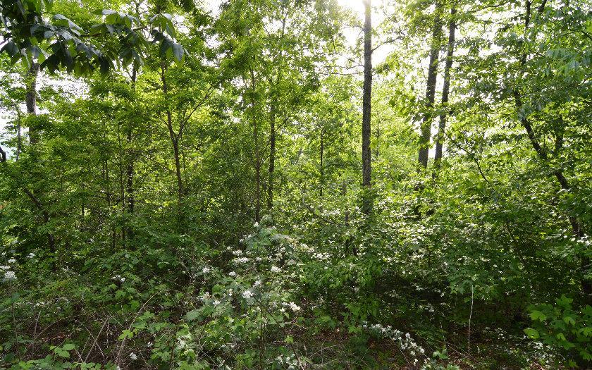 0 Overlook At Bell Meadows #40, Hiawassee, GA 30546