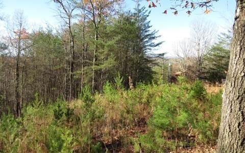 0 River Hills Dr #53, Mineral Bluff, GA 30559