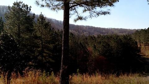 0 Reece Mtn #LOT 2, Ellijay, GA 30540