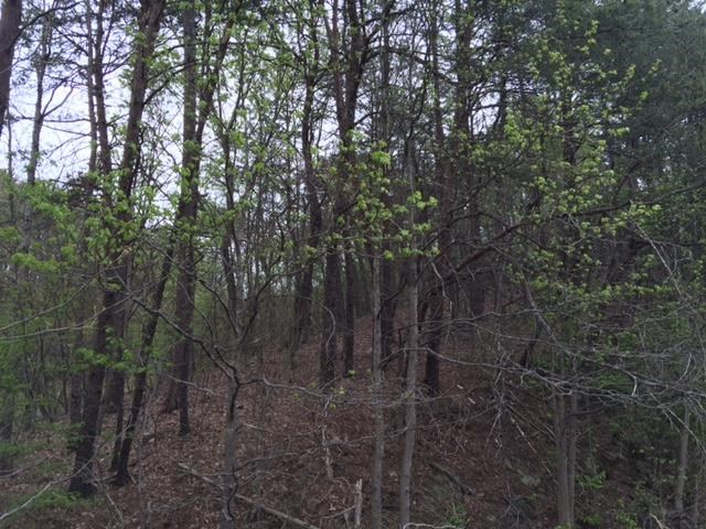 0 Red Bud Road, Ranger, GA 30734