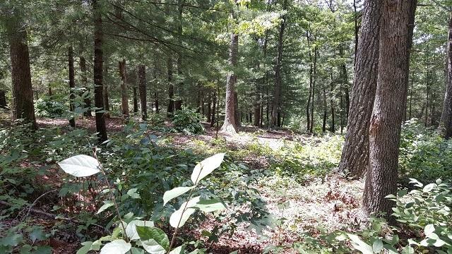0 Fenwick Woods #LOT 6, Clarkesville, GA 30523