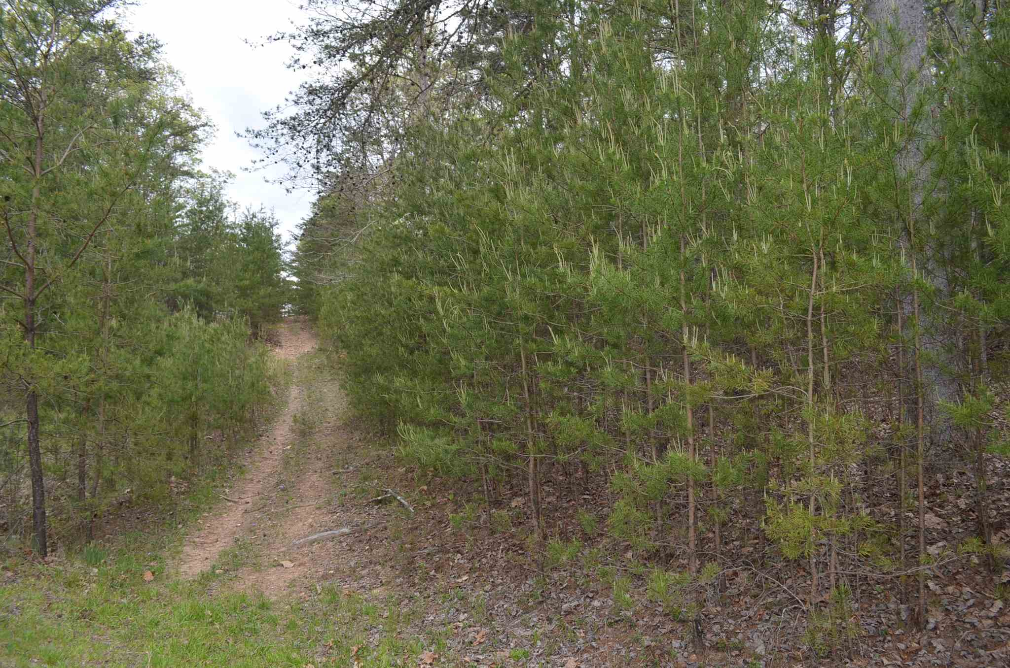 0 Warnock Mountain #7, Blairsville, GA 30512