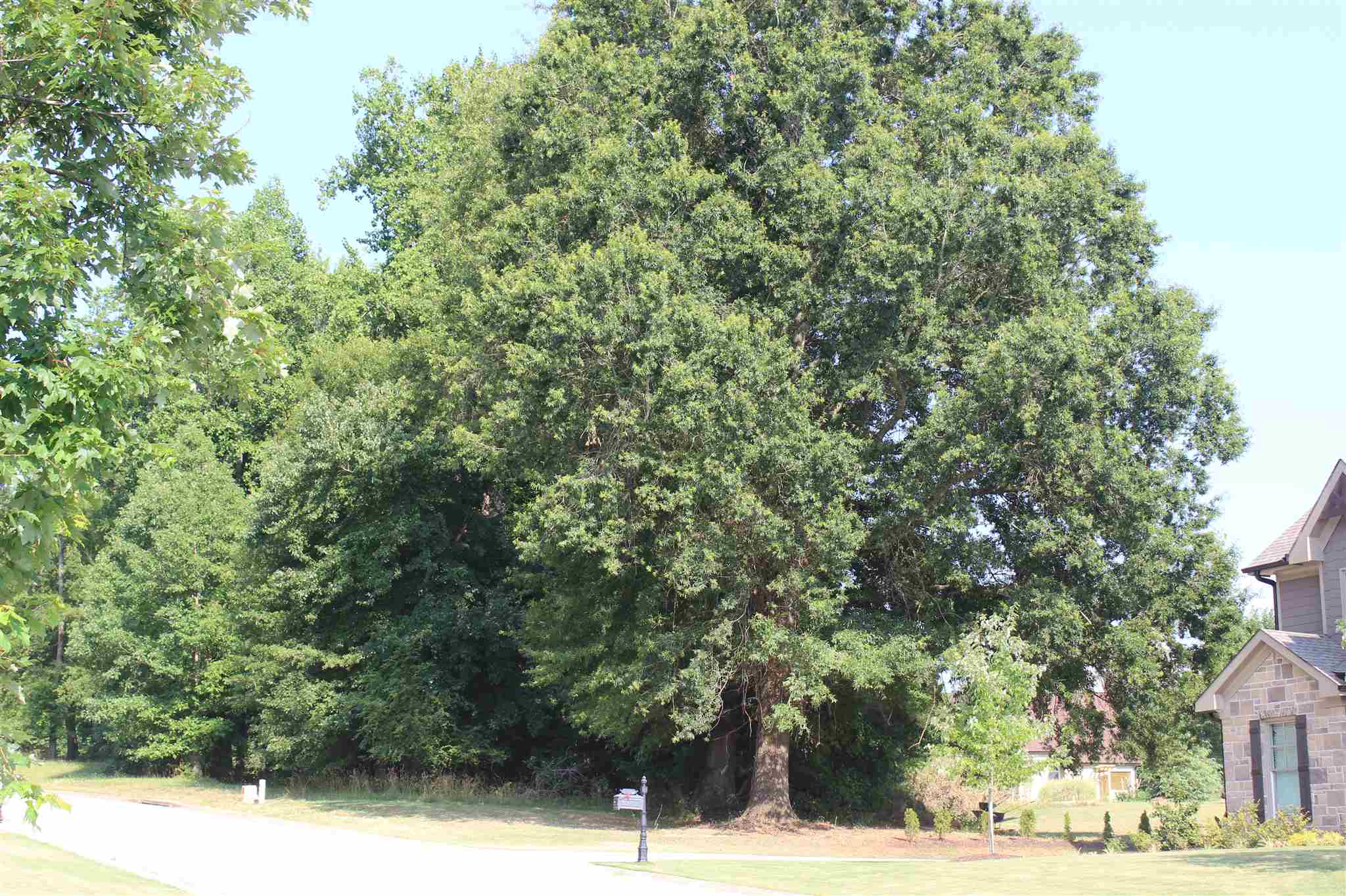 0 Mulberry Greens Lane #62-E, Jefferson, GA 30549