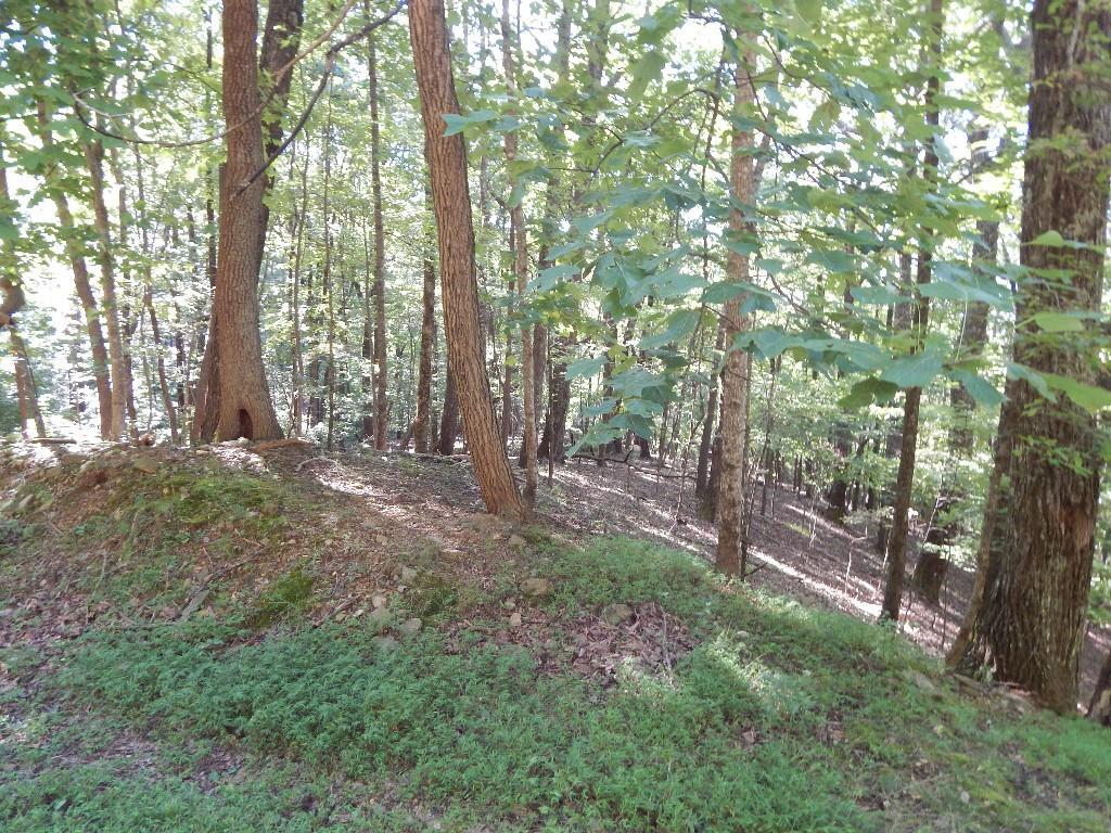 1707 Cutthroat Ridge, Jasper, GA 30143