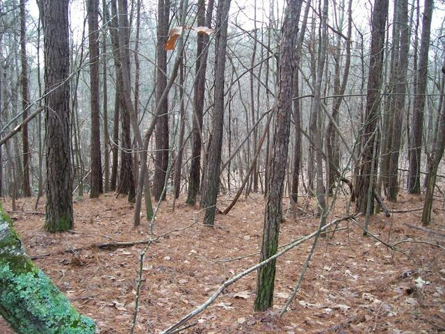 Lot 87 Pine Forest Road, Gainesville, GA 30504