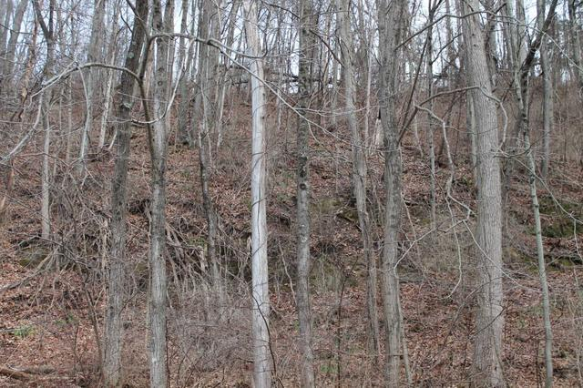 Old Pawling Rd, Dover, NY