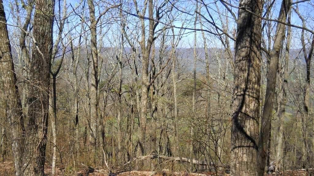 6 Barnes Road, Lookout Mountain, GA 30750