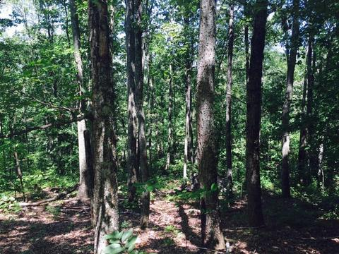 Lot 9 NW Crown Colony Dr, Cleveland, TN 37312